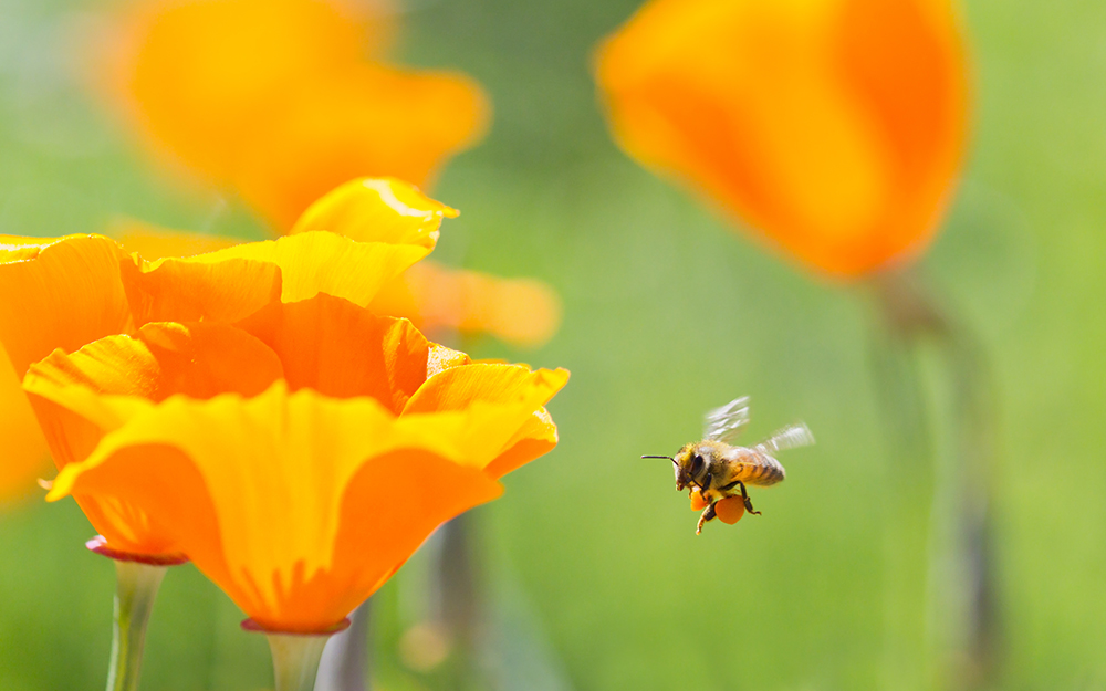 How to Treat a Bee Sting? | Cedars-Sinai